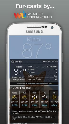 Скриншот Weather Kitty для Android