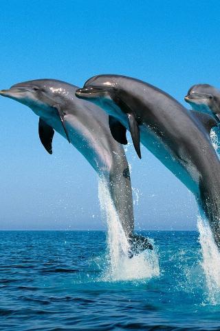 Скриншот 3D дельфины HD Live Wallpaper для Android