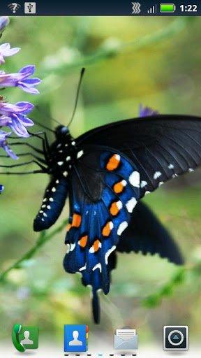 Скриншот Бабочки Живые обои / Butterflies Live Wallpaper для Android