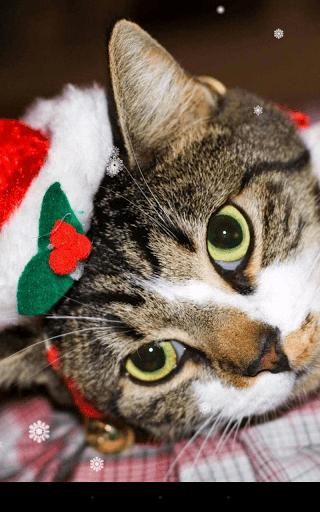 Скриншот Christmas Cat для Android