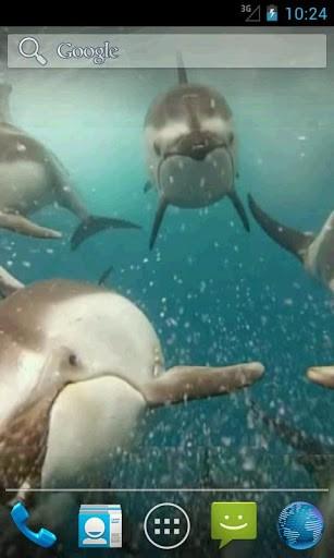 Скриншот Дельфины. Живые видео обои / Dolphins Video Live Wallpaper для Android
