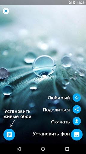 Скриншот Galaxy S3 живые обои Одуванчик / Galaxy S3 Dandelion LWP для Android