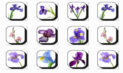 Скриншот Iris Flowers для Android