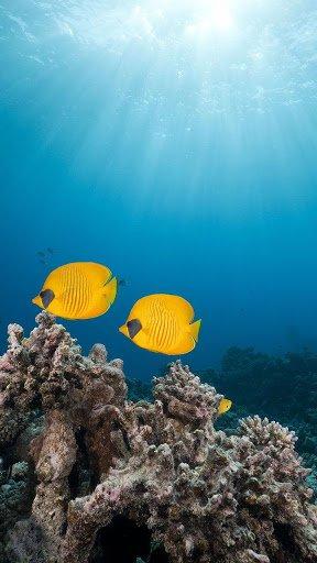 Скриншот Oкеанов Рыба Живые Обои для Android