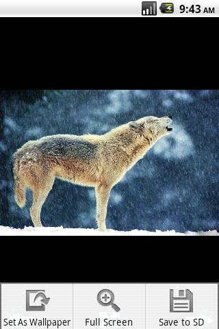 Скриншот Волк обои / Wolf Wallpaper для Android