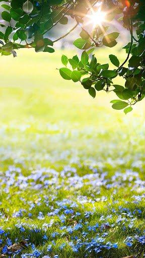 Скриншот Зеленая Весна Живые Обои для Android