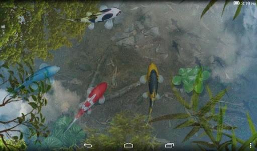 Скриншот Живые обои с Кои в пруду для Android